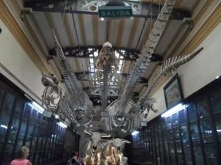 Museo de La Plata'da 6