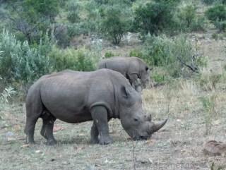 Serengeti Safari Hayvanları Kenya