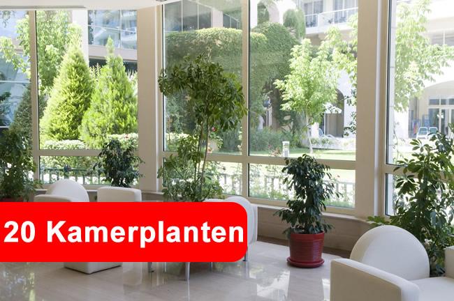 kamerplanten die giftige stoffen uit de lucht verwijderen