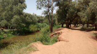 Am Fluss entlang, umgegen von Olivenbäumen