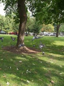 Pigeons Flying near Tree