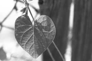 Boston_Area_Leaves_Black_White-3