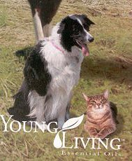 Pets: Dogs and cats love Young Living products