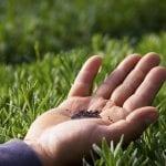 seed-lawn
