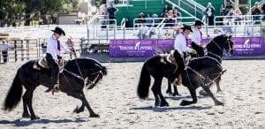 Fall Festival Horses