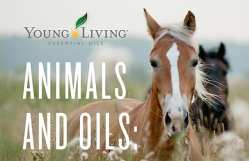 Animals and oils