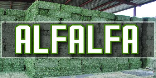 alfalfa-01