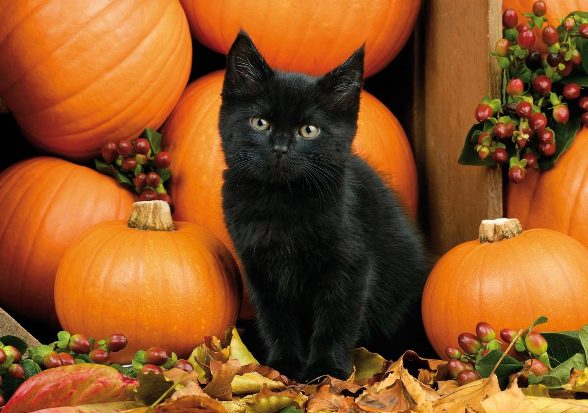 Fall Kitten Wallpaper Are You Prepared Georgia Farm Bureau Insurance
