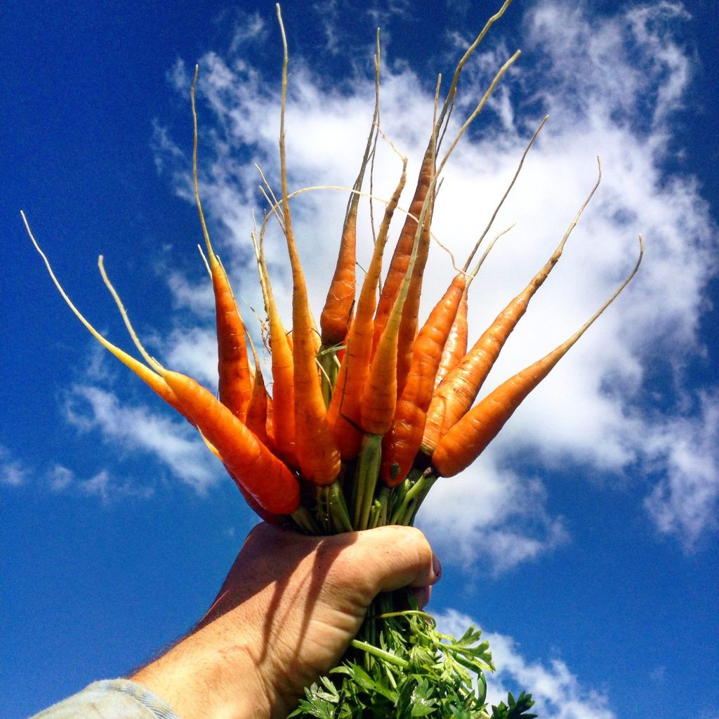 Plant It Forward: Creating Access to Healthy Food for Everyone
