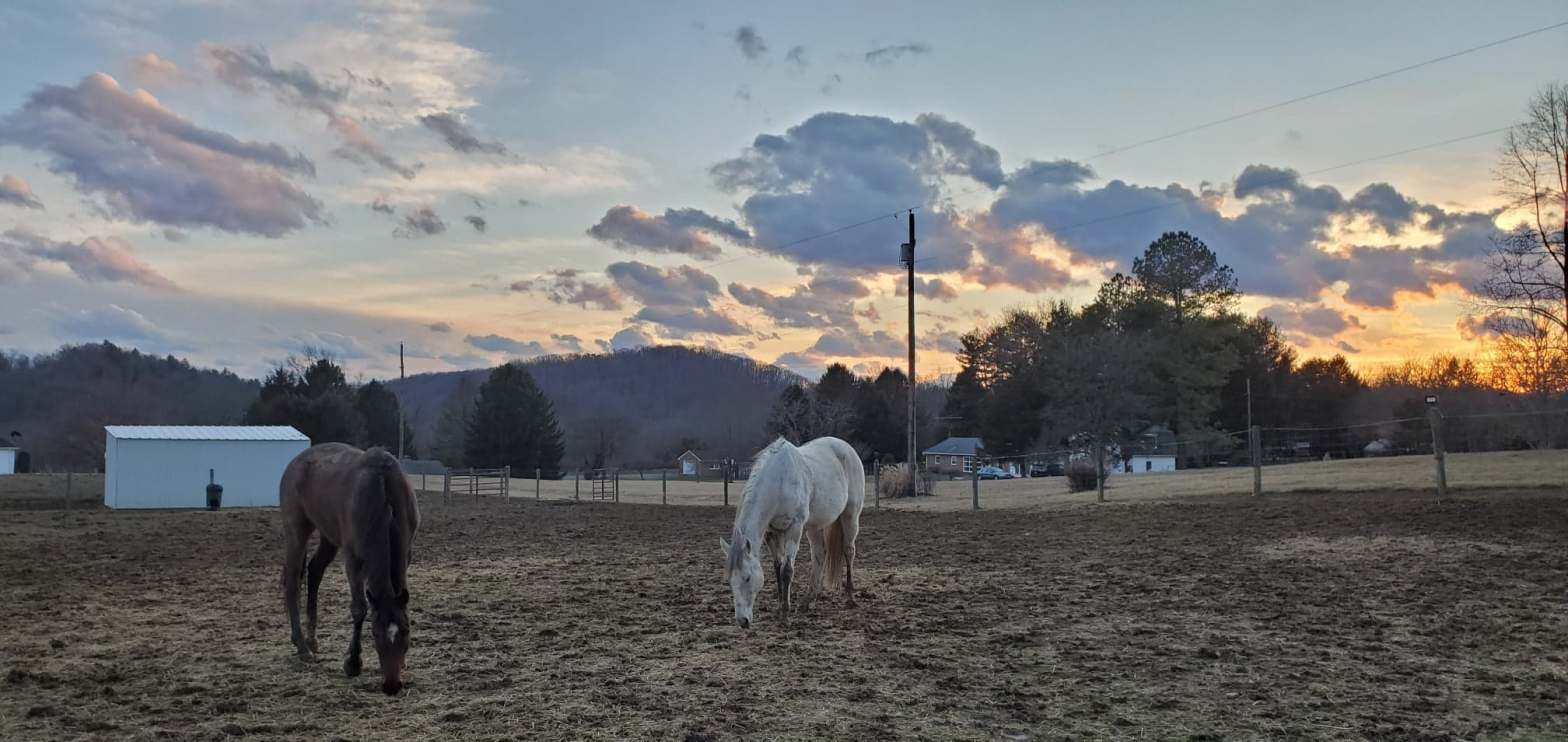 mud season at golden fleece farm