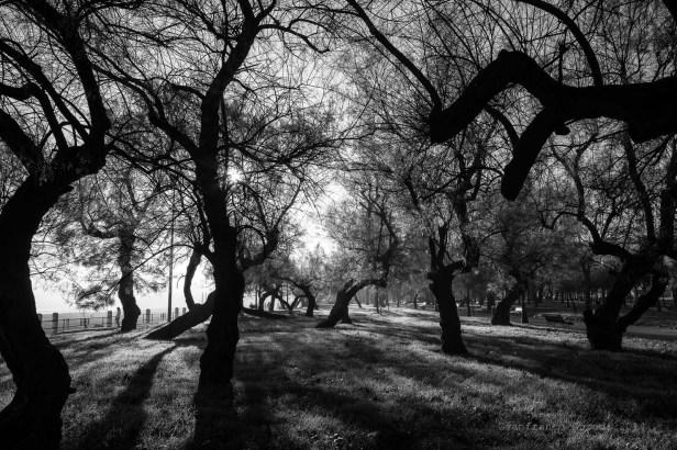 Árboles en Solsticio