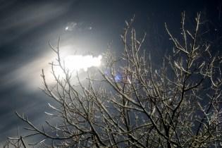 Luna, estrellas, ramas
