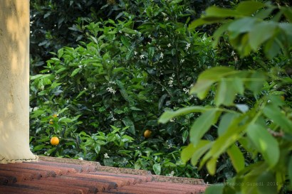 Esta no es mía, es de Elvira, mi profesora de pintura, que no pudo evitar mirar esa naranja enmarcada.