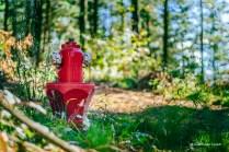 Sí, es lo que parece. Una boca de incendios roja en mitad de un bosque. Así, sin más. Me pareció grandioso