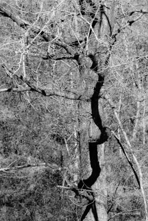 Sombra en el árbol.