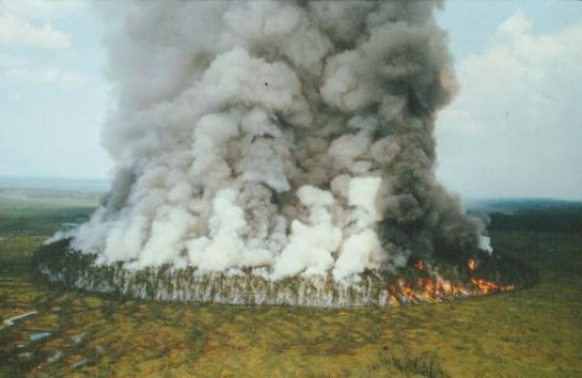 Bor Forest Island Fire Experiment