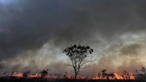 Waldbrand in Brasilien