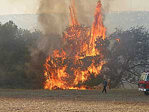Forest fire in northern Israel