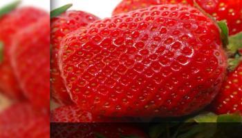 template gratuito powerpoint frutas