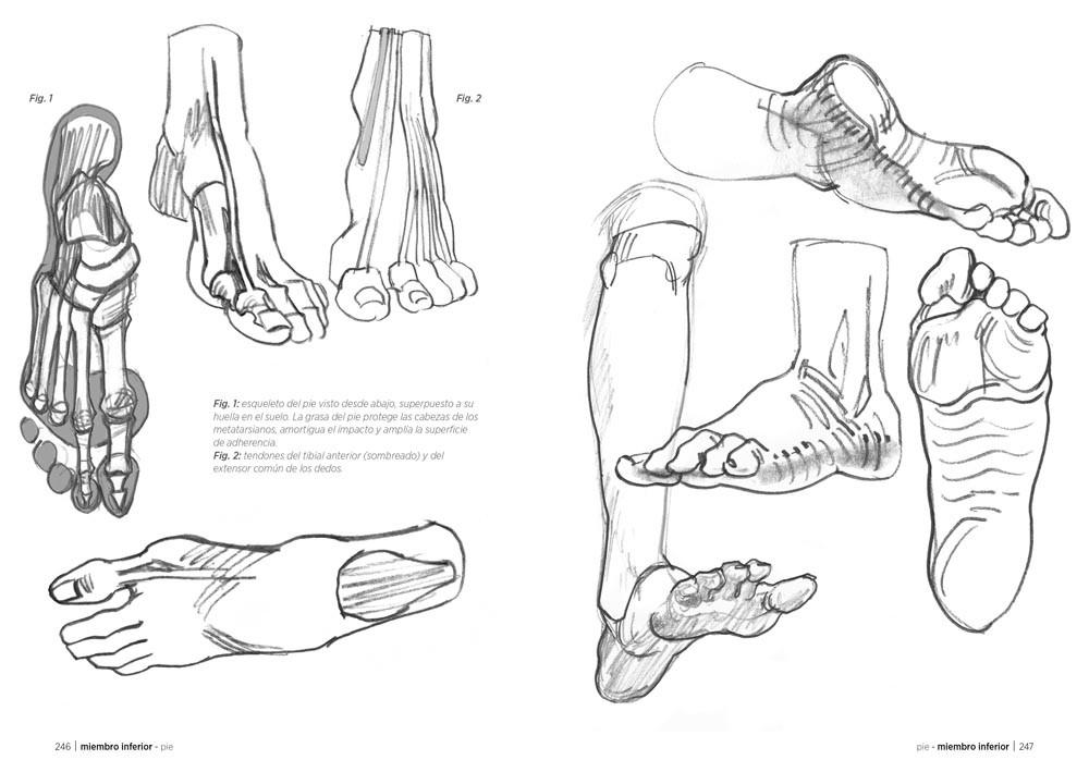 Anatomía artística (ebook), de Michel Lauricella