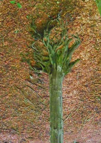 Copac ținând pamîntul