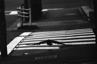 ©Masahisa Fukase