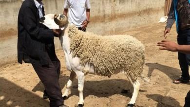 صورة هذا هو تاريخ عيد الأضحى 2019 بالمغرب