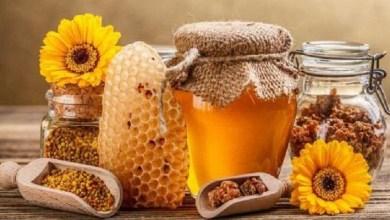 صورة تعرفي على فوائد غذاء ملكات النحل للحامل
