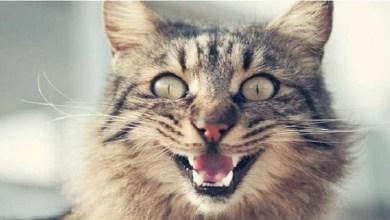 """صورة قطة """"شرسة"""" تحبس صاحبتها لمدة يومين داخل المطبخ"""