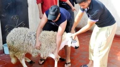 صورة نصائح لتجنب انتشار عدوى كورونا بين المغاربة خلال احتفالهم بعيد الأضحى