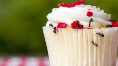 صورة 3 وصفات طبيعية لطرد النمل من المنزل.. تعرفي عليها