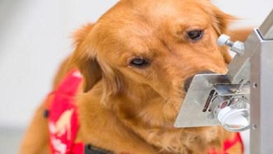 """صورة كلاب تكشف إصابات """"كورونا""""بنسبة 94%"""