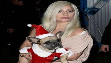 صورة ليدي غاغا تعرض مبلغا خياليا لمن يعيد إليها كلبيها