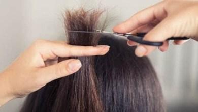 صورة زيت الزيتون وفعاليته في علاج الشعر المتكسر