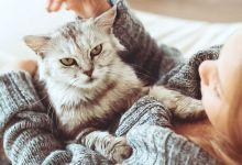 صورة التعامل المباشر مع القطط يزيد خطر الإصابة بهذا المرض
