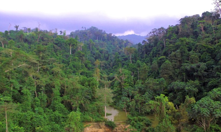 Atewa Forest Reserve