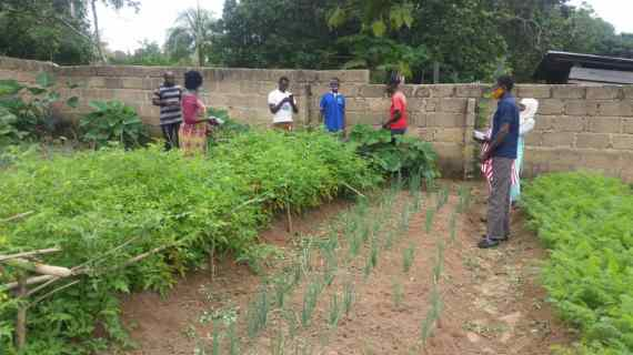 NGO Advocates For Traditional Planting Materials