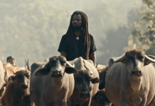 Rocky Dawuni Releases Visuals For 'Elevation'