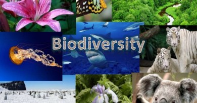 May 22 is International Bio-Diversity Day, Invest more into Bio-diversity
