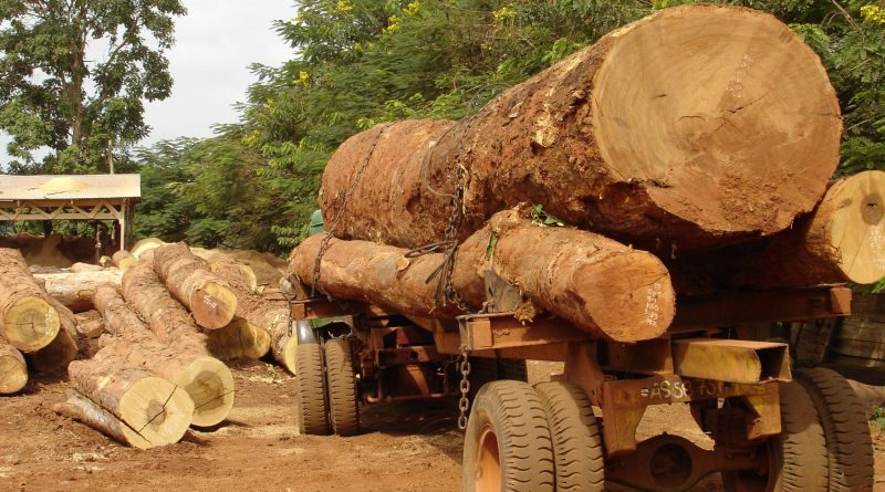 Timber Procurement Policy would Save Ghana's Forests - Government told