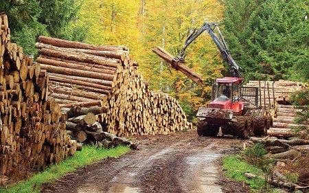 Government has abandoned us - Wood Traders Lament