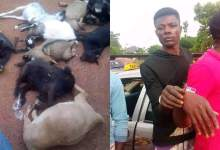 Police Arrests Two Guys At Berekum For Stealing 9 Goats