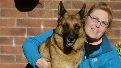 Finland: wife who left husband for German shepherd claims she is now pregnant