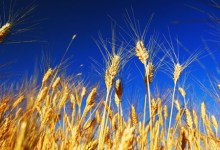 China:Agricultural insurer enjoys stable profits from crop business