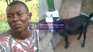 Man reportedly goes mad after his new girlfriend allegedly turned into goat while in bed with him