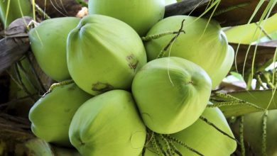Photo of 7 Amazing Health Benefits of Coconuts