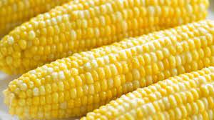 Photo of Stop Eating Corn If You Have This Illness, It Will Make It Worse