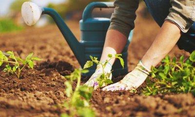 13 genius gardening ideas that will blow your mind