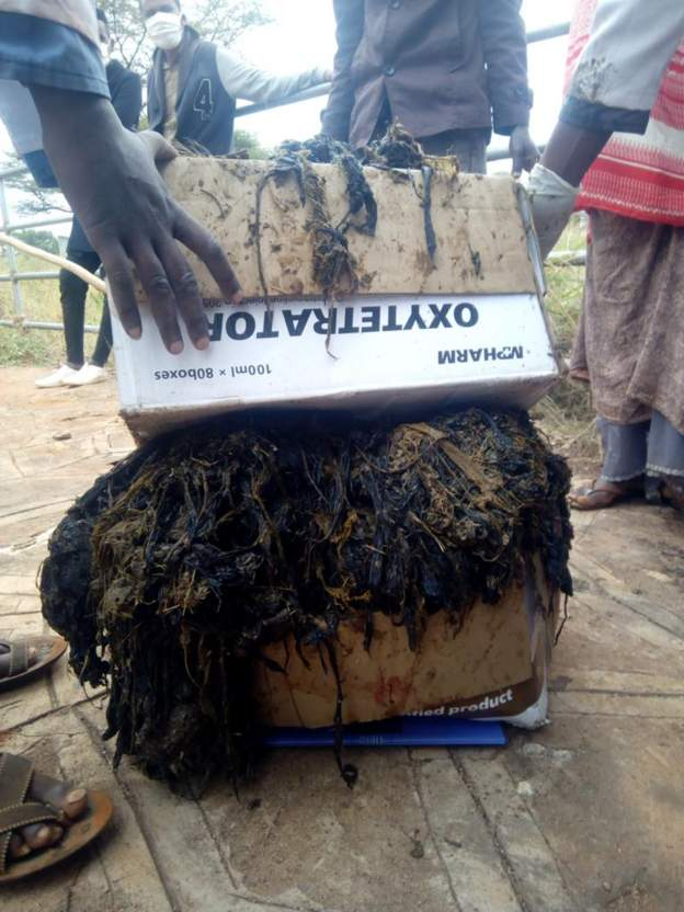 Vets remove 50kg of plastic from cow's stomach