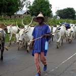 Suspected Fulani herdmen kill farmer in Enugu